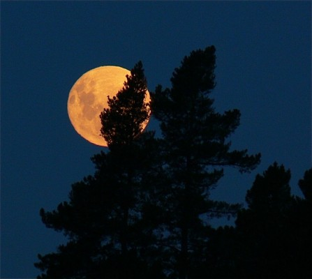 Full moon rising over Kanuka Ridge Backpackers
